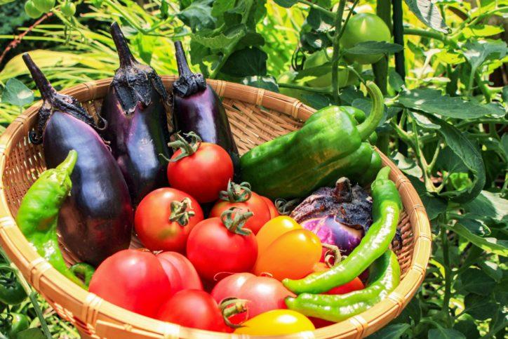 農産物品評会 中井町の生産者が育てた自慢の野菜や果物、米など展示