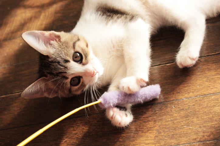 横浜・磯子でいそねこ協議会が20周年記念セミナー「平成と令和の地域猫活動」
