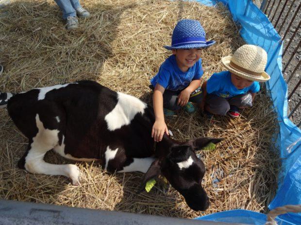 『第50回小田原市農業まつり』新鮮な農産物の即売や模擬店多数、仔牛と触れ合えるミニ牧場など