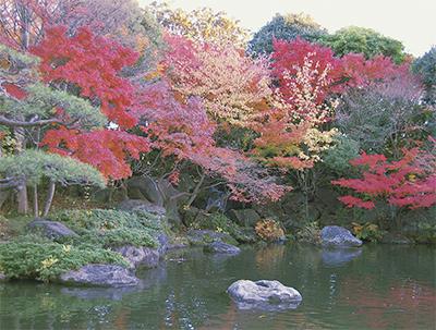 紅葉がパレットのように広がる平塚市総合公園【平塚市】