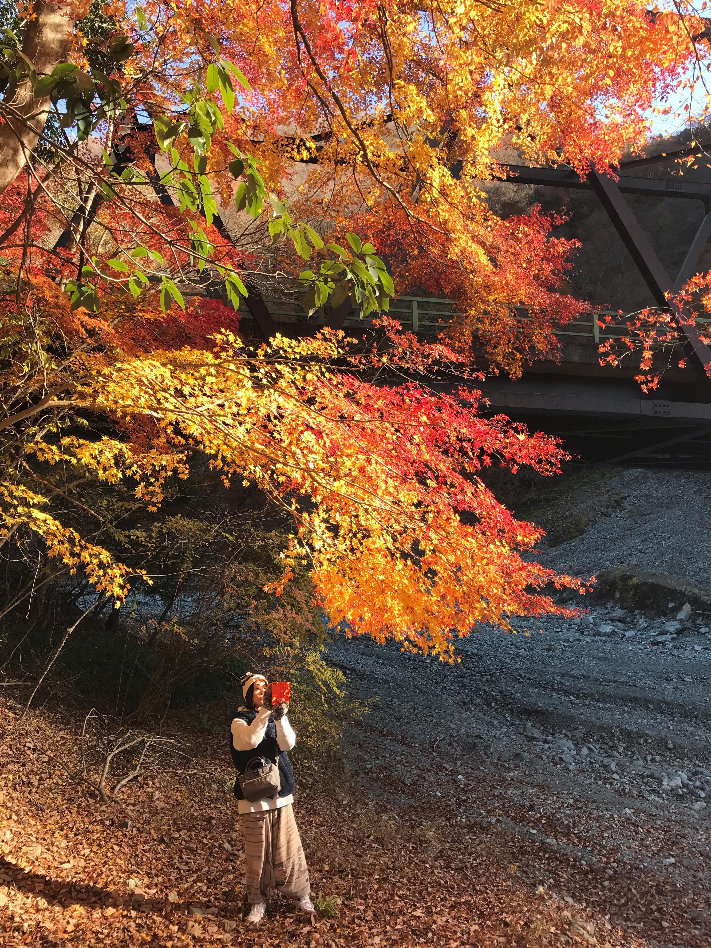 """神奈川の""""秘境"""" 山北町「小菅沢橋」で出合えるアートな紅葉の世界"""