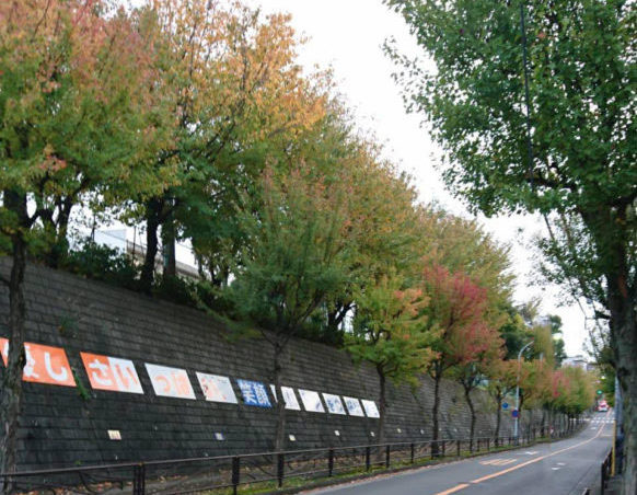西有馬小学校の校歌に登場する楓並木【川崎市宮前区】