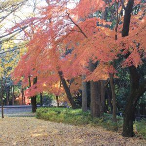 歴史息づく城山公園で愛でる紅葉【綾瀬市】