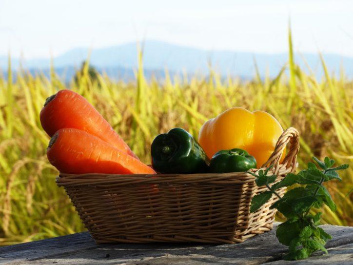 <初開催>県立三浦初声高校で実り楽しむ「第1回 収穫祭」ダイコン・ミカン・シクラメンなど