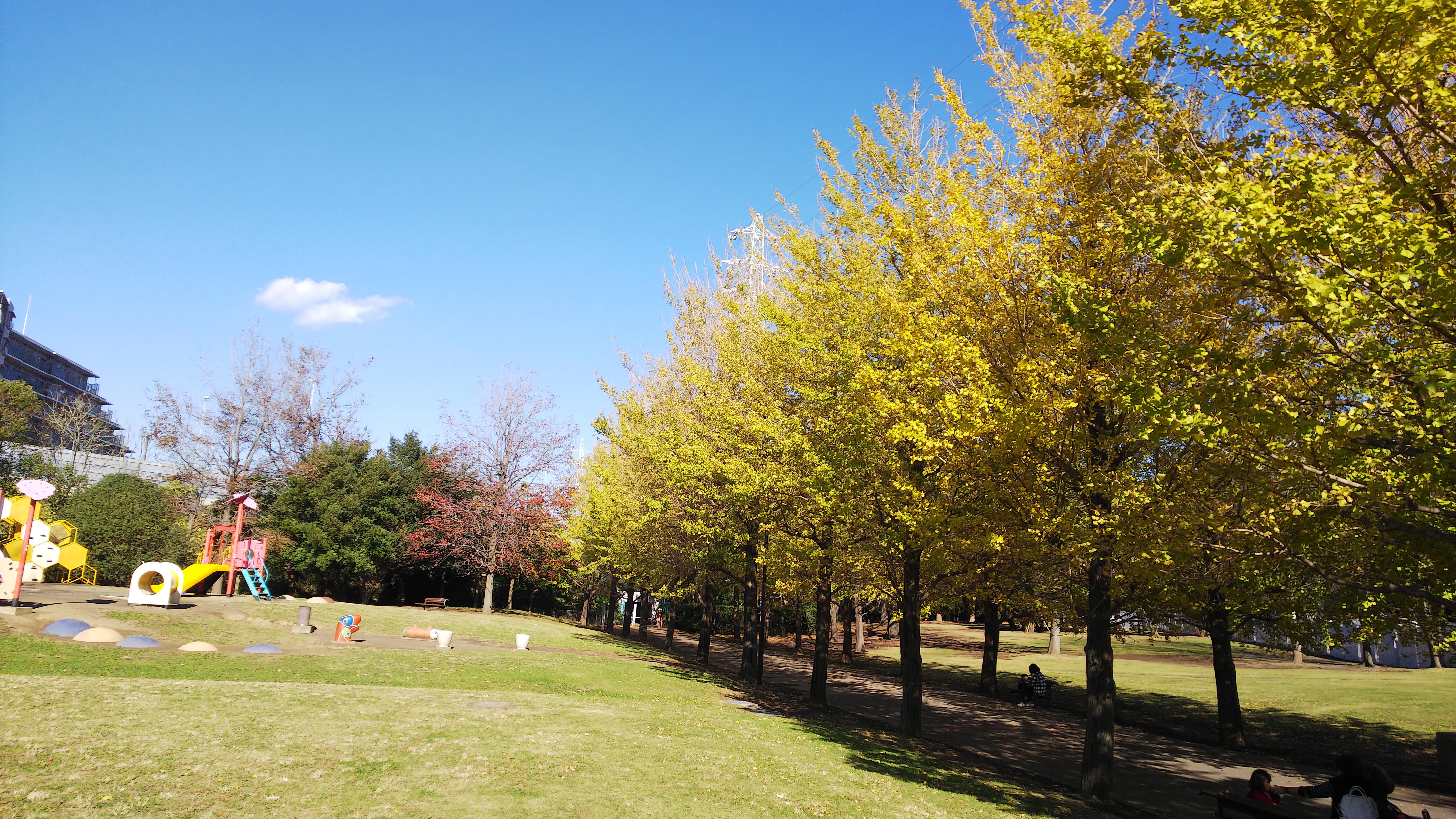 『秋色に染まるイチョウ並木』御殿辺公園(藤沢市)