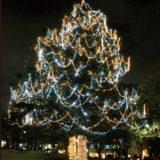 たまプラーザ・美しが丘公園~高さ25mのペアツリーイルミネーション2020【横浜市】