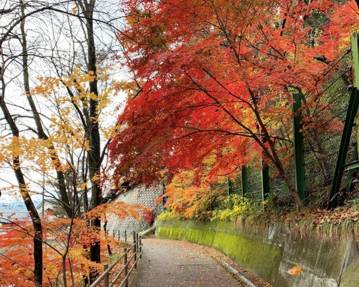 <随時更新>地元記者が推薦!「ご近所で紅葉狩り」神奈川周辺の紅葉2020版穴場スポット