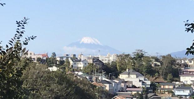 【取材レポ】ヤッホー!横浜で都会のオアシス発見「本牧山頂公園」5つの丘をぐるっと回る