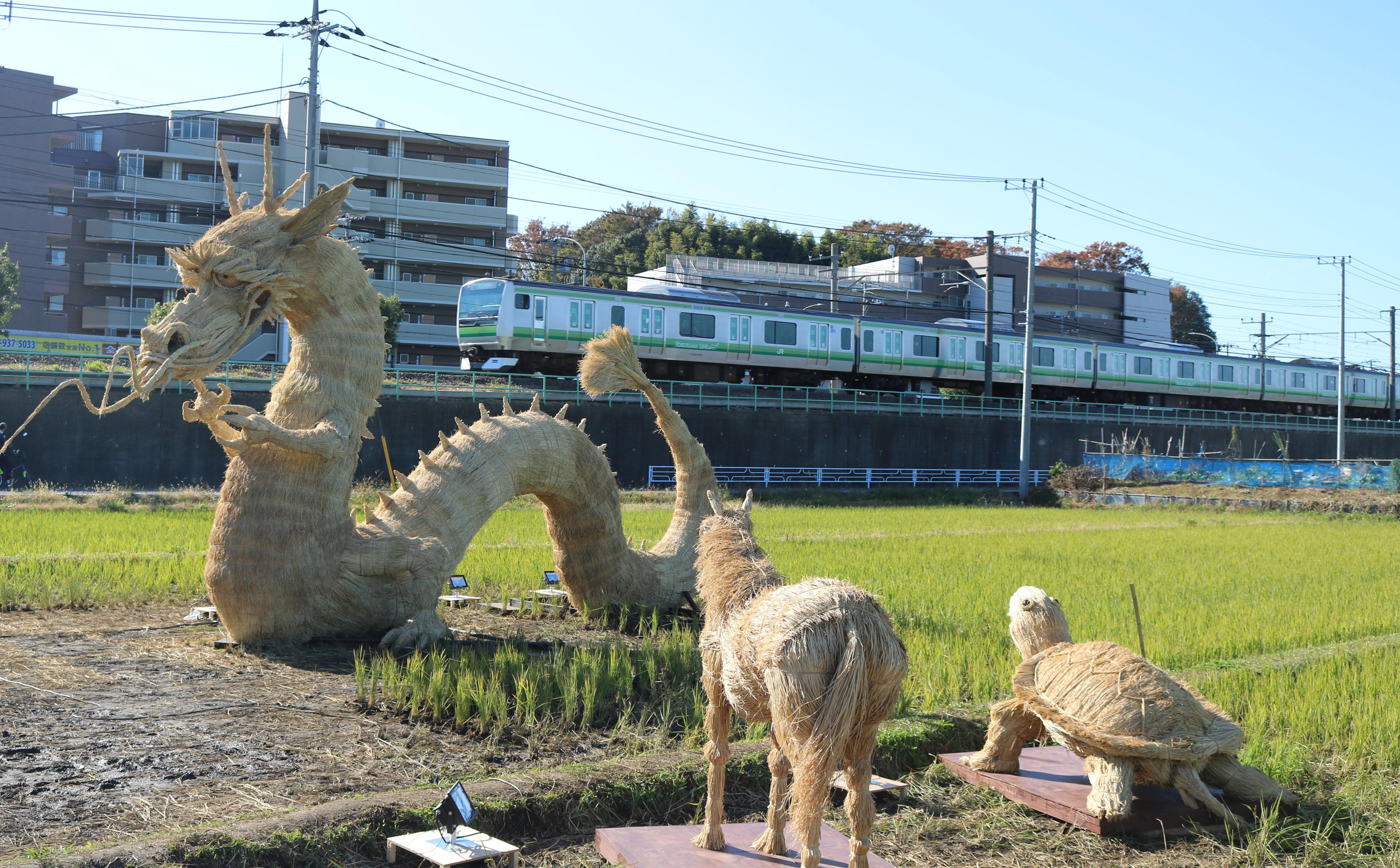 <超レア景色>横浜線沿い田んぼに巨大「龍」出現!?夜はライトアップも