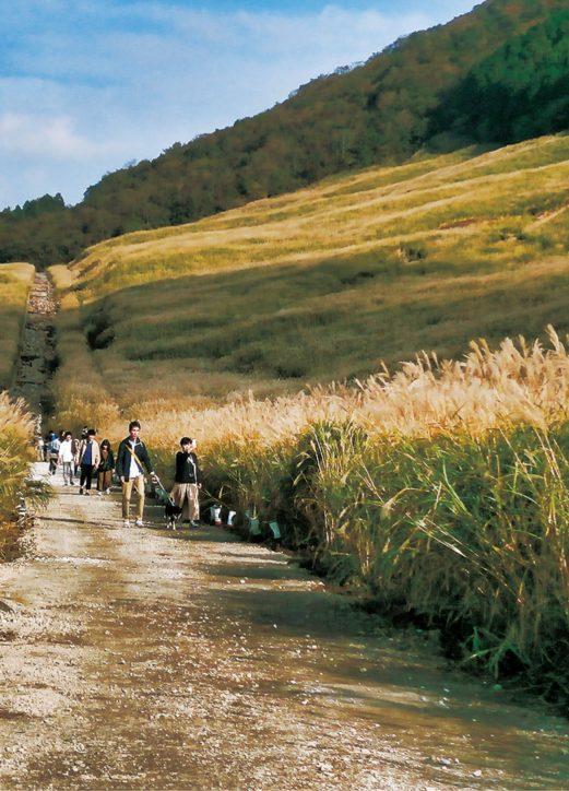 <2019年11月9日>箱根仙石原「すすき草原」遊歩道の一部が解除