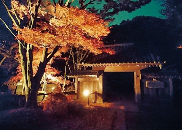 町田薬師池公園で初の夜間ライトアップ「観光資源の魅力向上を」