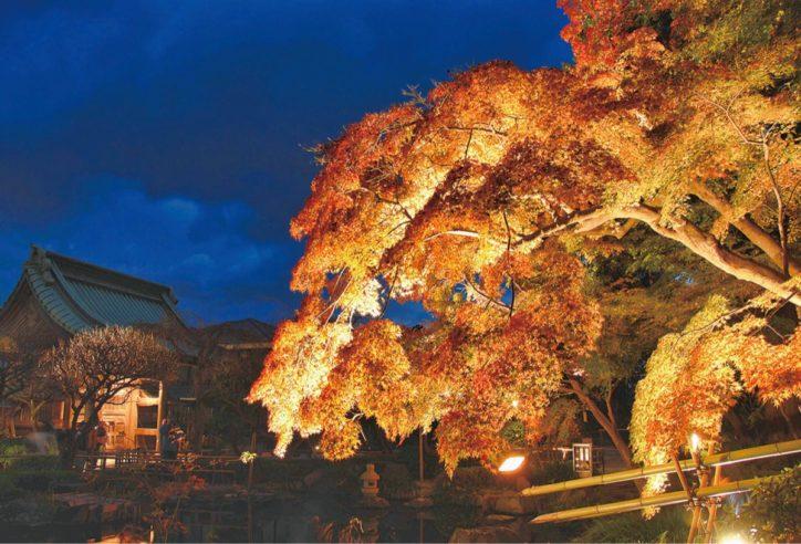 鎌倉「長谷寺」で紅葉ライトアップ12月8日まで開門時間延長
