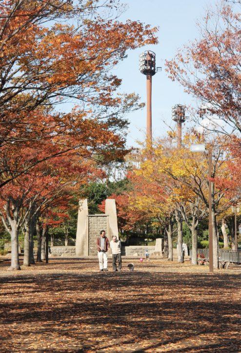 並木道に紅葉色付く 小田原の上府中(かみふなか)公園