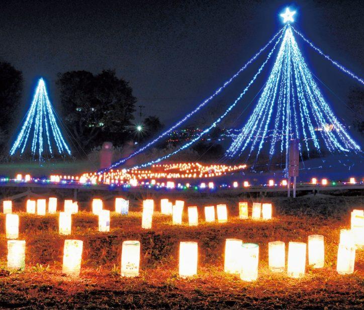 2019年の「あかりの祭典」水辺に幻想的な光を灯す@中井町 厳島湿生公園