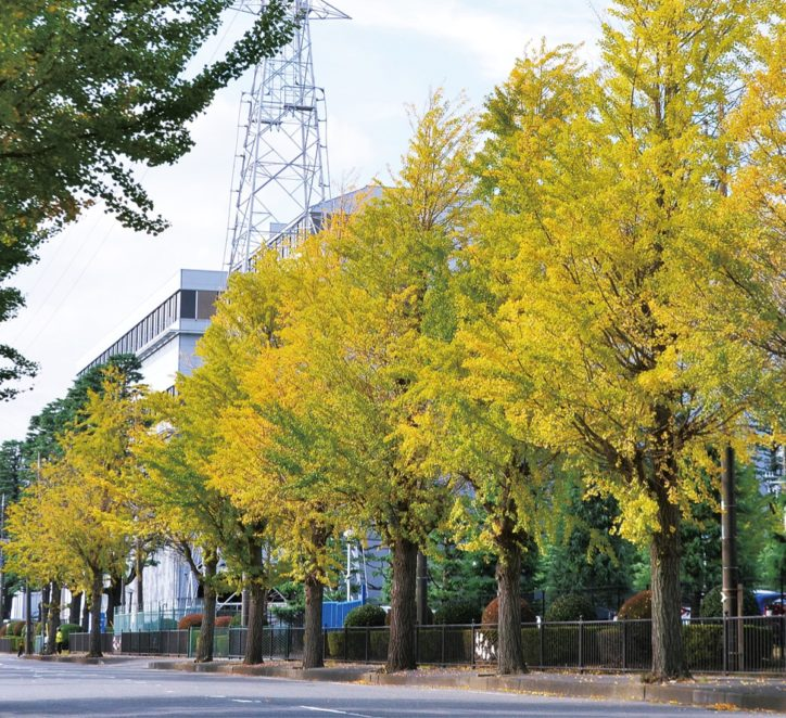 2020年の秋色黄金色はもうすぐ ~内陸工業団地のイチョウ並木【厚木市】