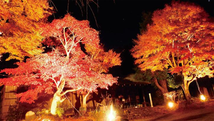 秦野「緑水庵」国登録有形文化財の指定へ ライトアップやコンサートも