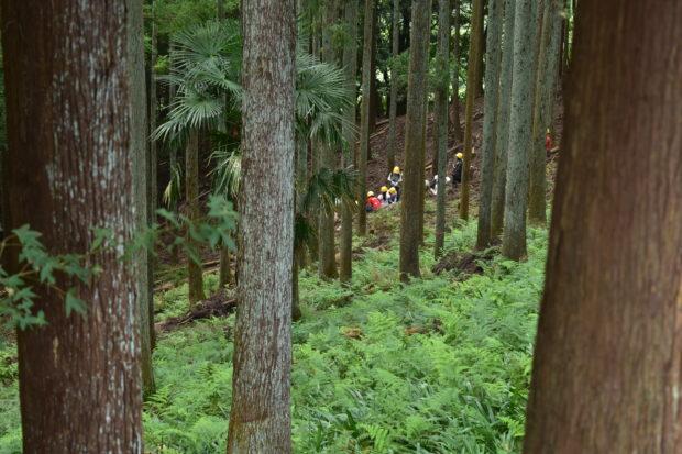 【参加者募集】山北町『共和の山で木とあそぼう!』間伐体験からキャンプファイヤーまで