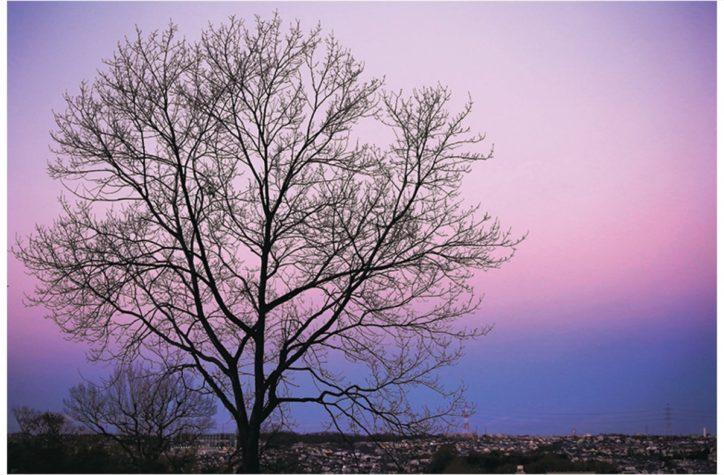 フォトコンテスト写真展 横浜・青葉の自然や街並みなどの入賞作品48点が並ぶ
