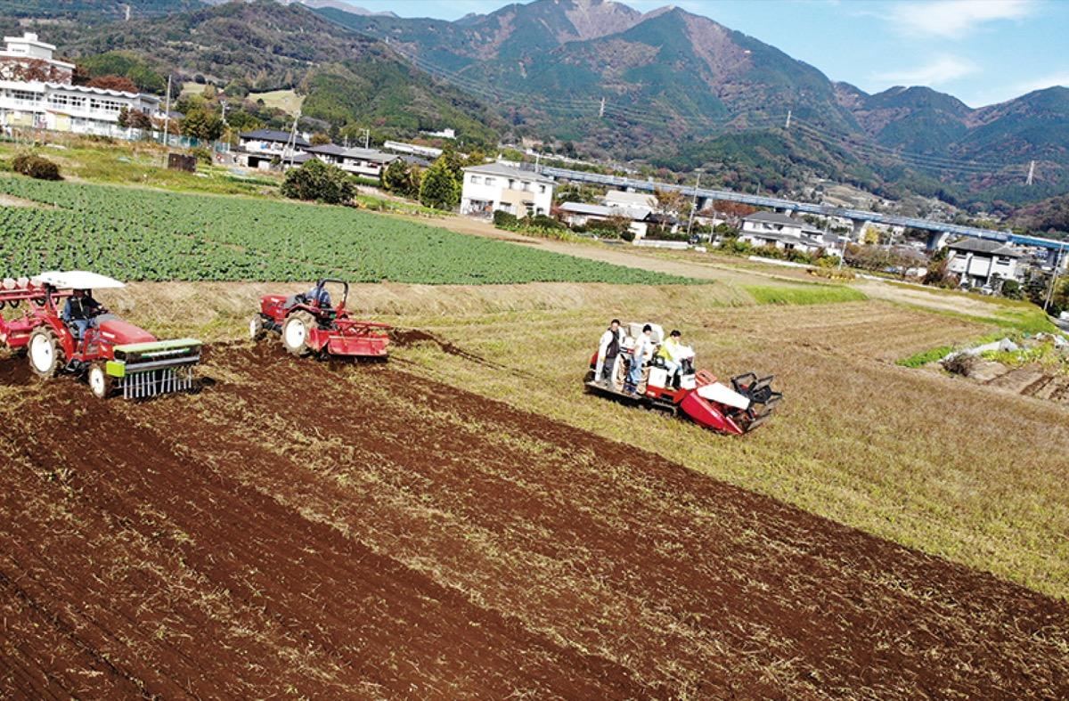 丹沢そばが新そば収穫 大型農機具3台使い