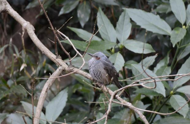 <山頂散歩レポ!>横浜・本牧山頂公園で観察できた野鳥たち