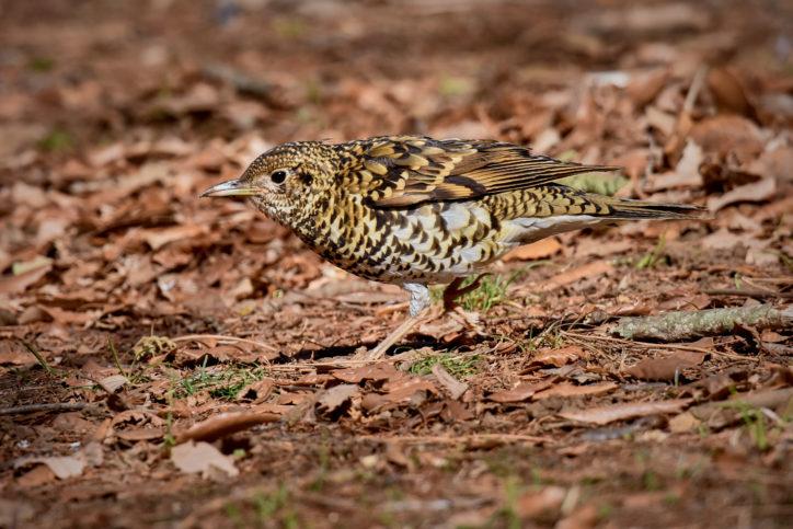 「里山カレッジ講座」散歩しながら冬の野鳥観察会を楽しもう 町田・小山田緑地