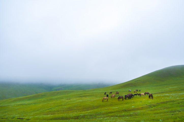 写真やカザフの刺繍・イランの絨毯展示「遊牧ぐらし~草原の民と砂漠の民~」【横浜市・栄区】