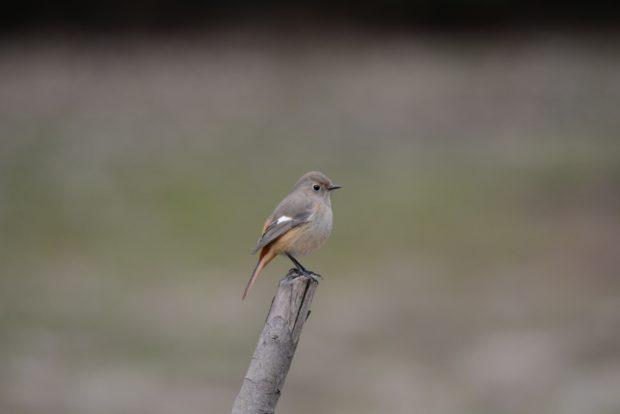 <初開催>横浜・本牧山頂公園で冬鳥たちの観察会 公園職員とめぐる山頂散歩