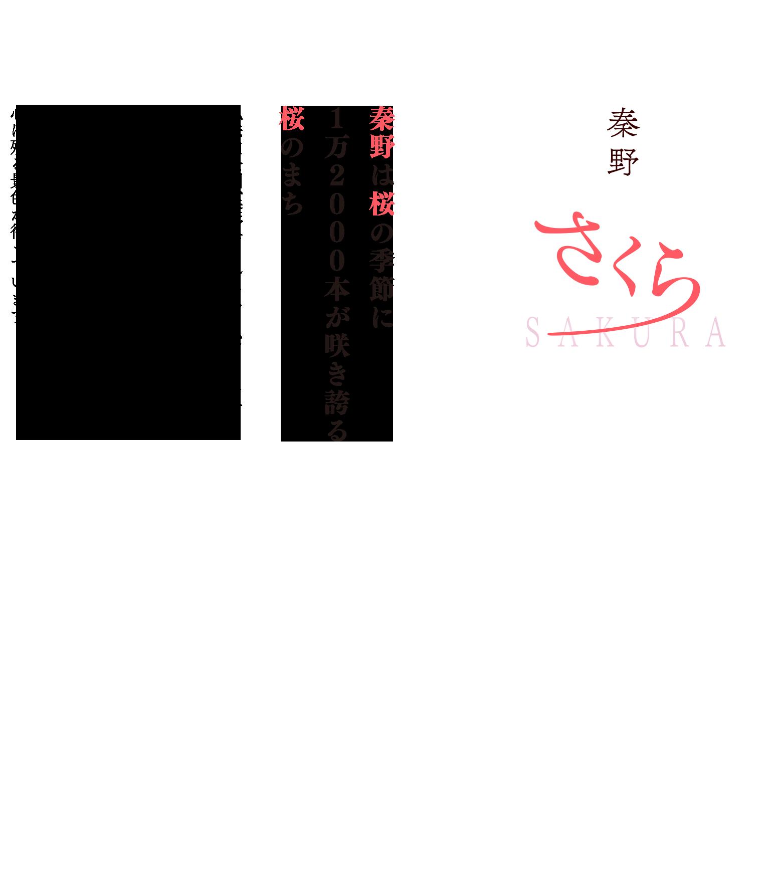 秦野は桜の季節に1万2000本が咲き誇る桜のまち