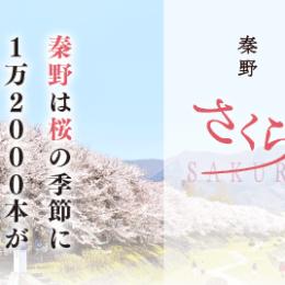 秦野(はだの)の桜を見に行こう - 神奈川の桜穴場スポット 秦野さくら2021