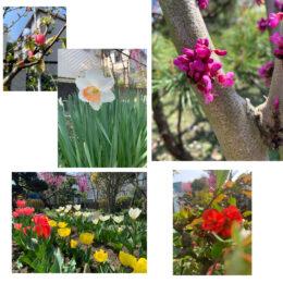 神奈川で4月に見られる花&イベント