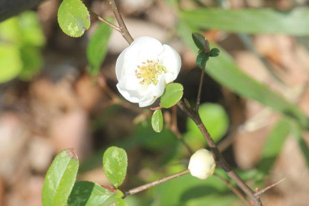 大和市「ふれあいの森」は春の花々散策スポット