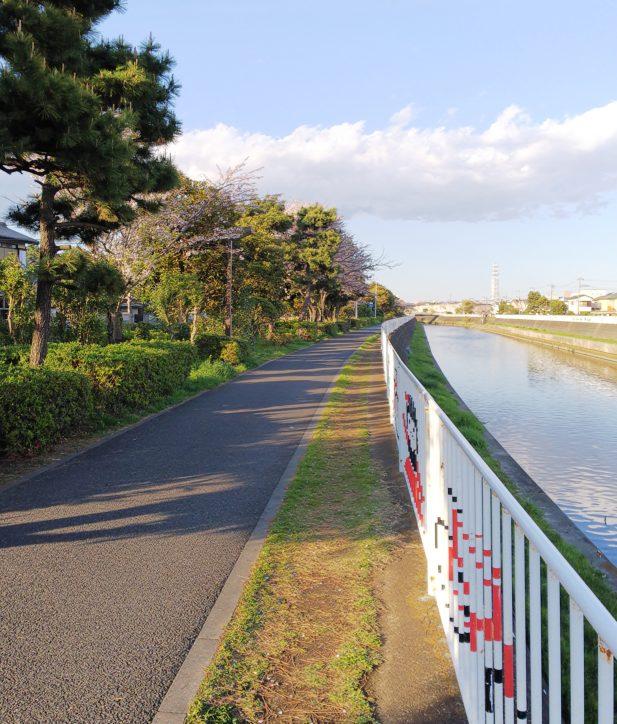 <歩いてみました!レポ>藤沢「引地川緑地」遊歩道で桜を愉しむ