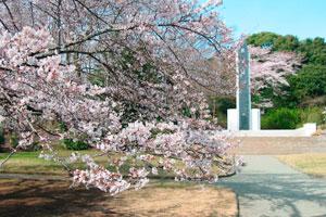 小田原市民の定番お花見スポット「城山公園」