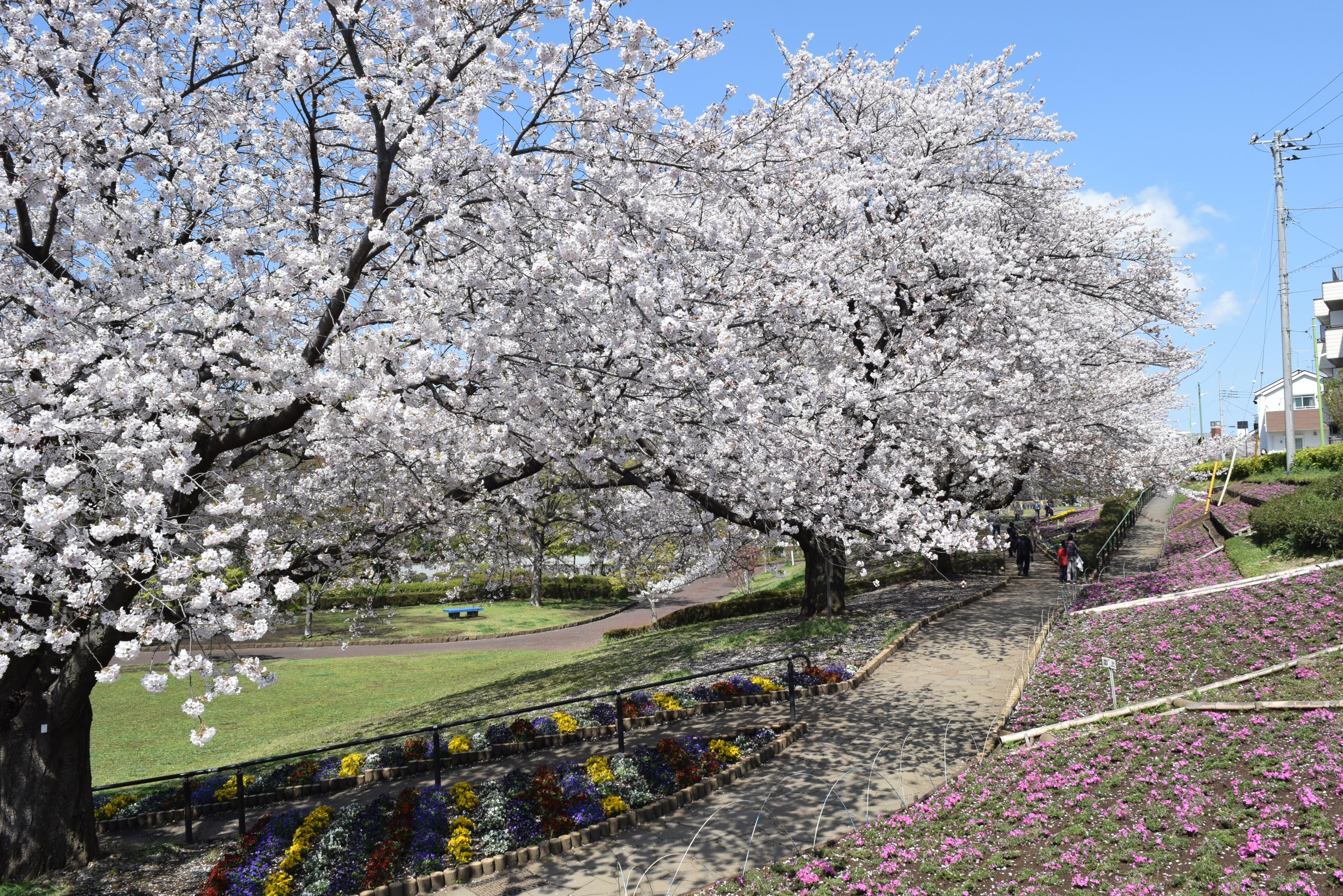 【駅近×自然暮らしレポ】都内から45分〝お花見できる家〟神奈川・座間「かにが沢公園」隣