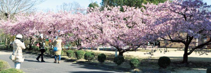 様々な種類の花が楽しめる『県立相模原公園』【2020年3月】