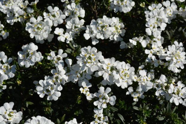 横浜外国人墓地 ~ 港の見える丘公園を花巡り散歩【2020年3月11日撮影】