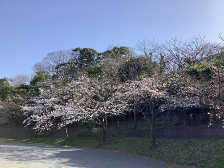 地元の子供たちに人気の公園で桜が楽しめる【横浜・山手見晴らし公園】