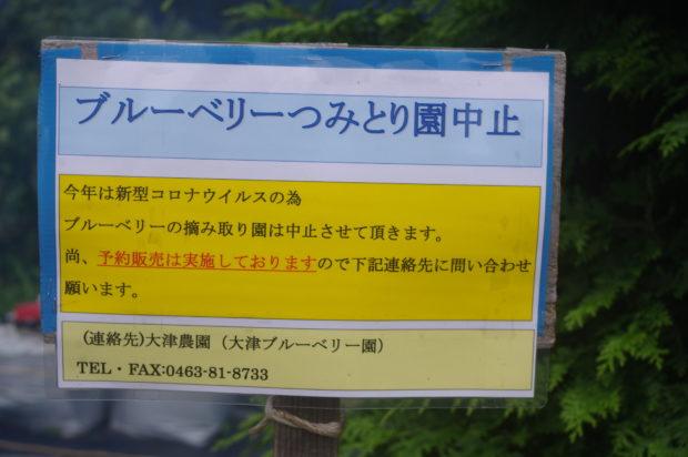 8. 大津ブルーベリー園
