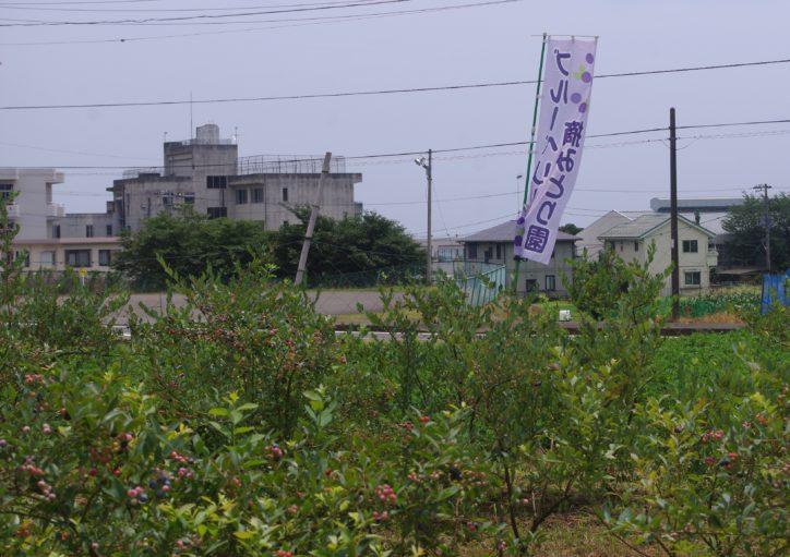 3. フルーツランド谷井農園(千村)