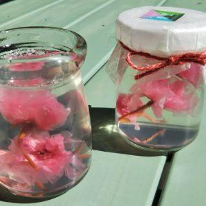 秦野産八重桜を使った寒天「はだの桜KANTEN」/MaySea's(秦野市)