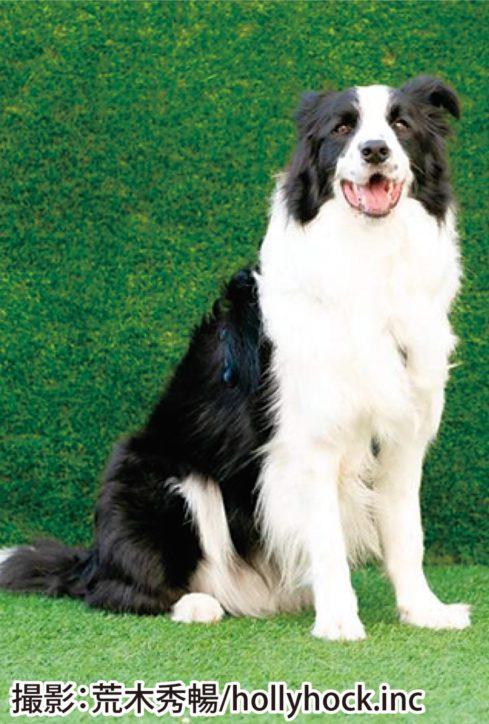 横浜ベイクォーター「第14代マスコット犬」コンテスト、出場犬募集中