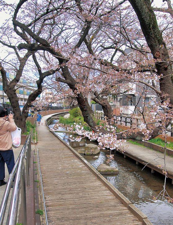川崎市の二ヶ領用水が国文化財に正式登録 !市民に親しまれる観光資源に