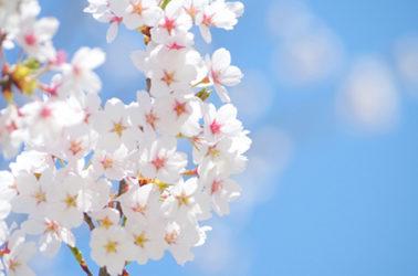 【読者プレゼント】光と音の夜間イベントへご招待!箱根強羅公園