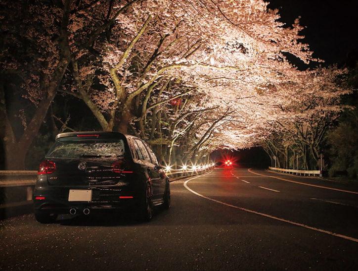 ドライブにおススメ「ターンパイク箱根」桜のトンネルを駆け抜ける感動!夜桜ライトアップも