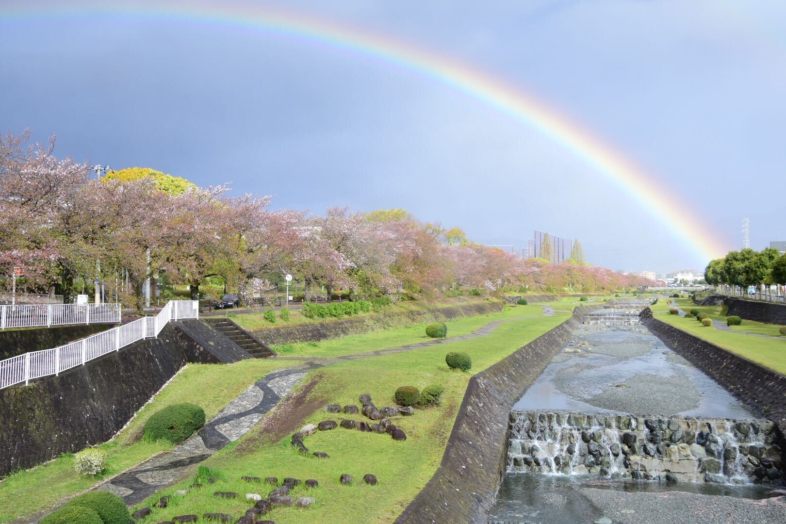 秦野(はだの)の桜を見に行こう - 神奈川の桜穴場スポット 秦野さくら2020
