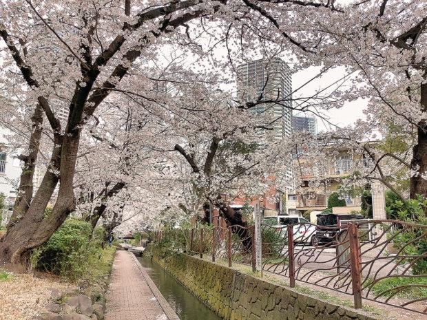 川崎市中原区「桜咲き 春の訪れ」スポット
