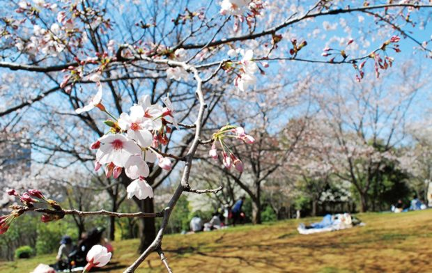 横浜・都筑の「桜の名所」で一息を  散策後は人気パン屋へ