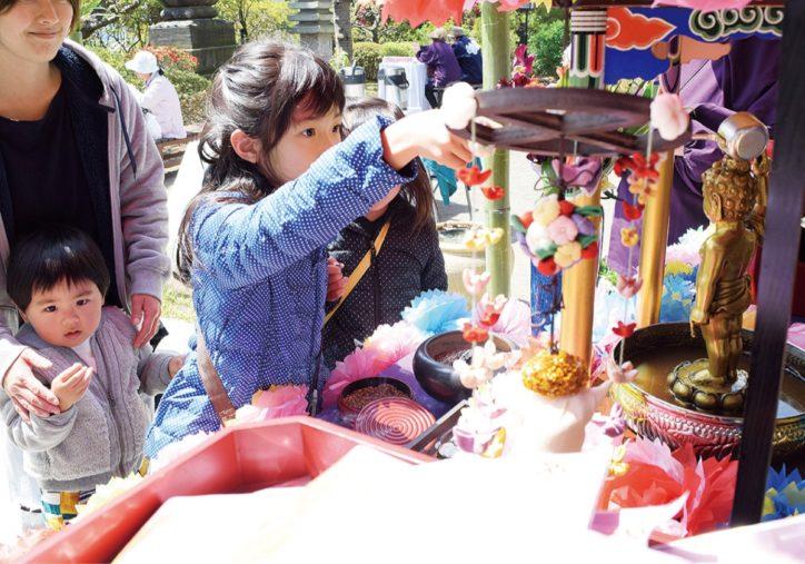 春の伝統行事 茅ヶ崎・成就院で花まつり