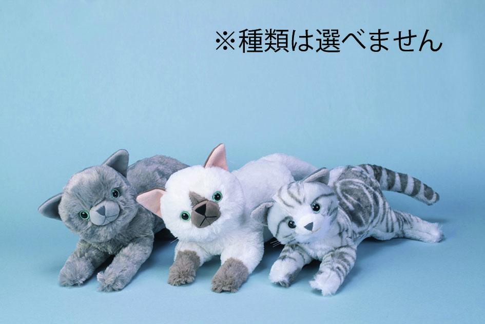 【読者プレゼント】こどもタウンニュースふじさわ版春号企画!猫型ロボットなどが当たる