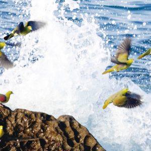 <国内最大級の飛来地>大磯町の鳥「アオバト」2020年も海水求め照ヶ崎海岸へ